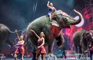 """Buil To Amaze!"" features elephants. (Courtesy of Field Entertainment)"