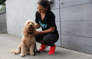 Zingy recently launched an app to connect dog owners with a community of trained and trusted dog walkers. (Zingy)