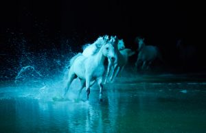 Let the horses of Odysseo captivate you this holiday season. (Andrew Miller)