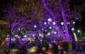 Bask in the glow of L.A. Zoo Lights over the holidays.